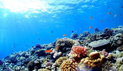 6/20に「サンゴに優しい日焼け止め」の販売に取り組む若手女性起業家の話からサンゴ礁について考えることが出来るイベントが開催